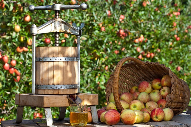 Celebrate National Apple Month!